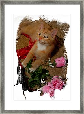 Roses And Ribbons Framed Print