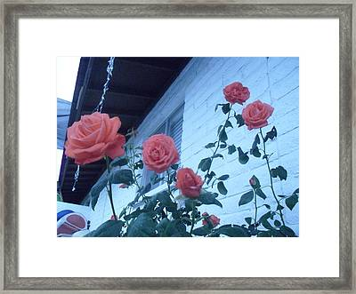 Roses By The Pool Framed Print