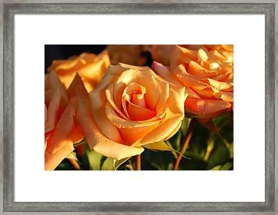 Roses For Me Framed Print