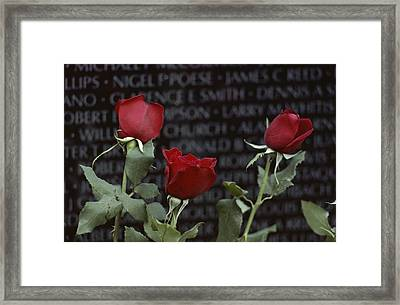 Roses Glow Against The Black Granite Framed Print