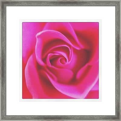 #roses Framed Print