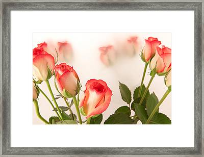 Roses Framed Print by Tom Gowanlock