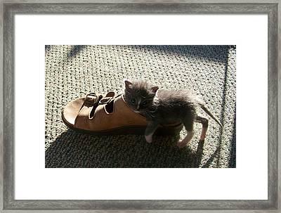 Rosey With Sandal Framed Print