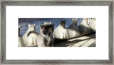 Rosie And Friends Framed Print by Barbara McGeachen