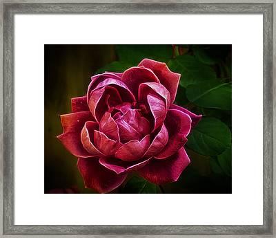 Rosy Pink Framed Print by Bill Tiepelman