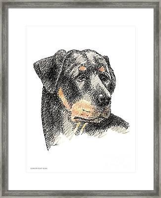 Rottweiler-artwork Framed Print by Gordon Punt