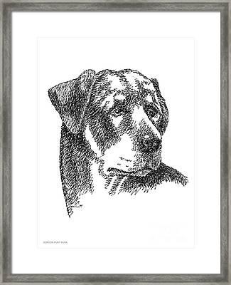 Rottweiler-drawing Framed Print by Gordon Punt
