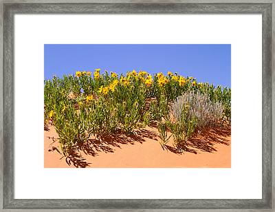Rough Mule Ears Framed Print