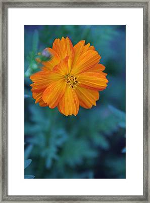 Roughly Complementary Framed Print by Elizabeth Sullivan