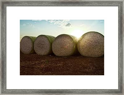 Round Bales Of Picked Cotton Framed Print