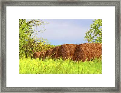 Round Bales Framed Print by Tom Mc Nemar