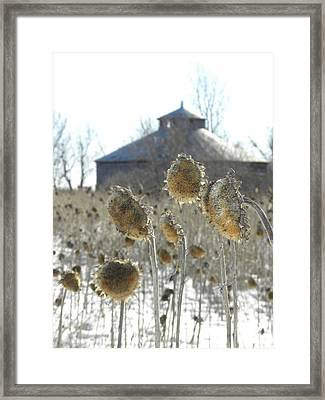 Round Barn With Sunflowers Framed Print