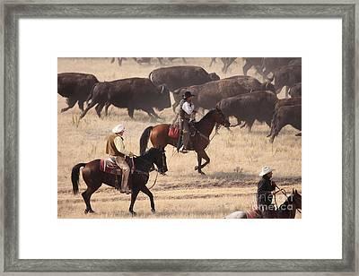 Round Em Up  Cowboys Framed Print