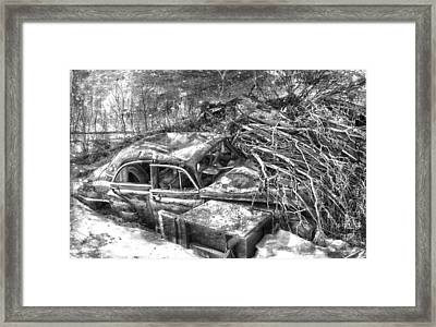 Routes In Roots  Framed Print