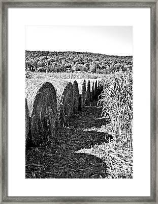 Row Framed Print by Kyra Wilson