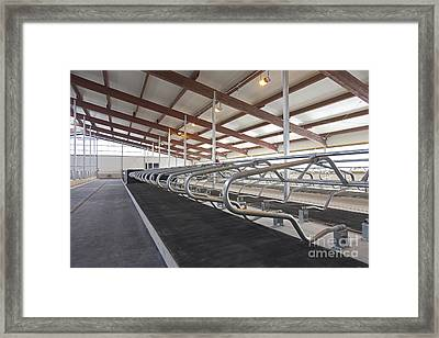 Row Of Cattle Cubicles Framed Print