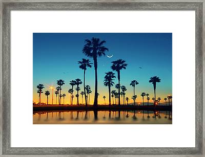 Row Of Palm Trees Framed Print by Lee Sie Photography
