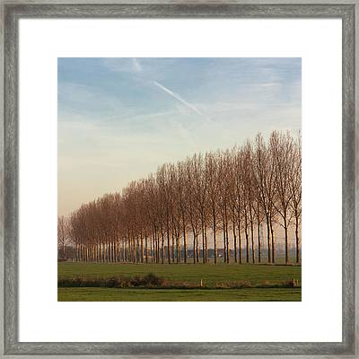 Row Of Trees Against Blue Sky Framed Print by Leentje photography by Helaine Weide