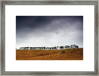 Row Of Trees In A Field, Yorkshire Framed Print by John Short