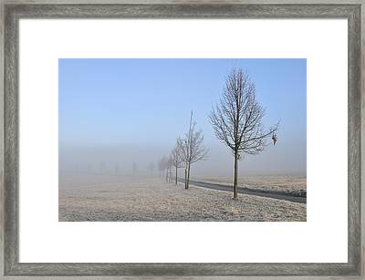 Row Of Trees In The Morning Framed Print