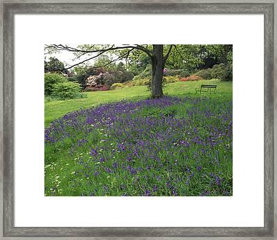 Rowallane Garden, Co Down, Ireland Wild Framed Print by The Irish Image Collection