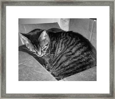 Rox In A Box Framed Print by Juliana  Blessington