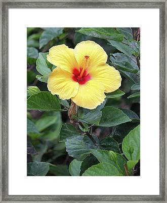 Framed Print featuring the photograph Royal Hibiscus by Craig Wood