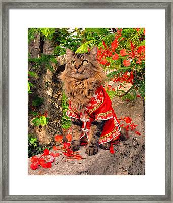 Royal Poinciana Framed Print