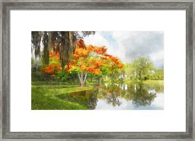 Royal Poinciana Lake Framed Print by Francesa Miller