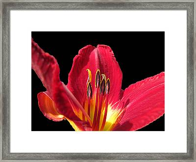 Framed Print featuring the photograph Royal Red by Debbie Portwood