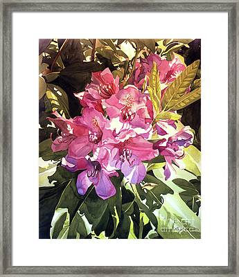 Royal Rhododendron Framed Print