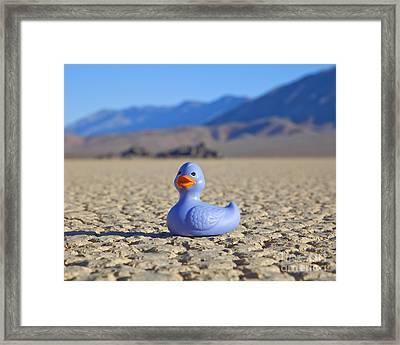 Rubber Duck In Desert Framed Print by David Buffington