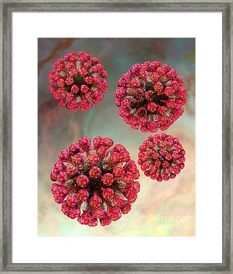 Rubella Virus Particles Framed Print