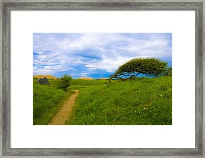 Rubjerg Path Framed Print