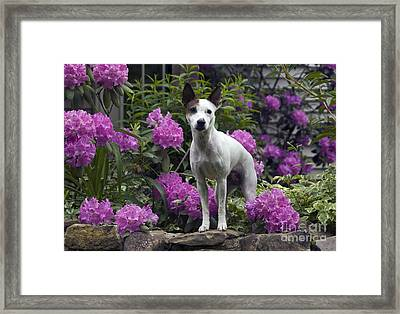 Ruby In The Garden Framed Print by Denise Dempster