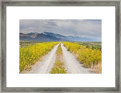 Ruby Mountains Wildflower Road Framed Print by Sheri Van Wert