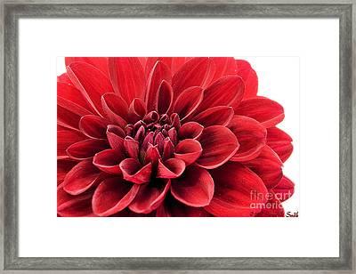 Ruby Red Framed Print