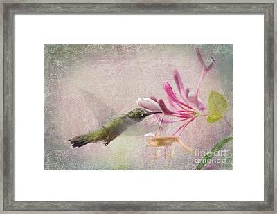Ruby Throated Hummingbird #3 Framed Print by Betty LaRue