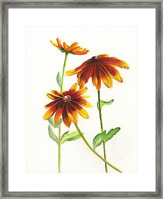 Rudbeckia Hirta Framed Print by Sharon Freeman
