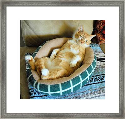Rudy's Nap Time Framed Print