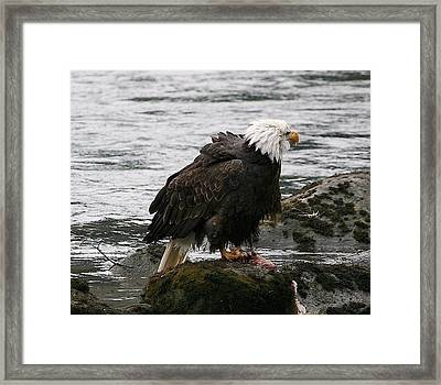 Ruffled Framed Print by Carrie OBrien Sibley