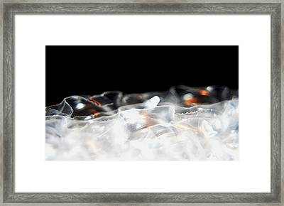 Ruffled Framed Print by Catherine Morgan