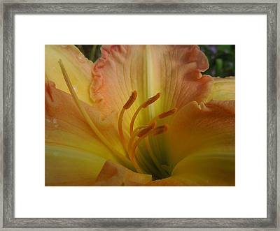 Ruffled Lily II Framed Print by Peg Toliver
