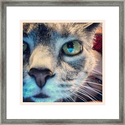 Ruger Sniffing The Camera  Framed Print by  Abril Andrade Griffith