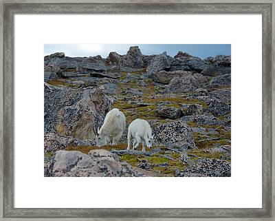 Rugged Terrain Framed Print by Stephen  Johnson
