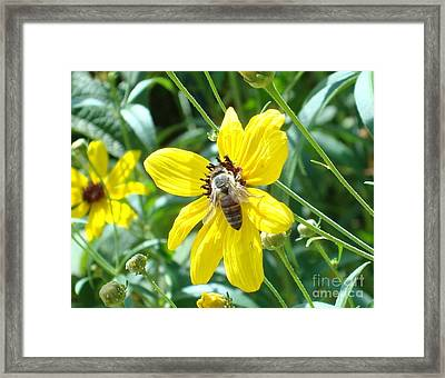 Rumble With A Bee Framed Print by Tina McKay-Brown
