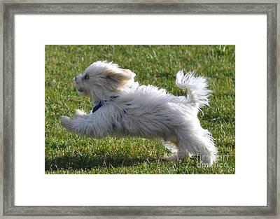Run Like The Wind Framed Print