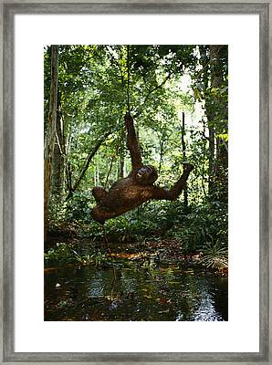 Running, Chasing And Swinging On Vines Framed Print by Michael Nichols