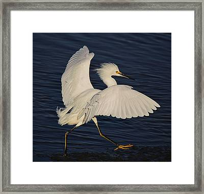 Running Late Framed Print by Paulette Thomas