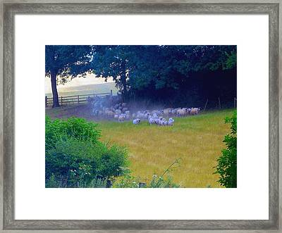 Running Of The Sheep Framed Print
